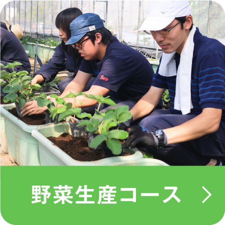 野菜生産コース(埼玉校)