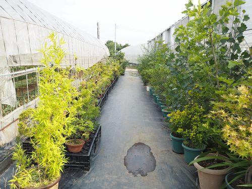 盆栽や樹木の苗木