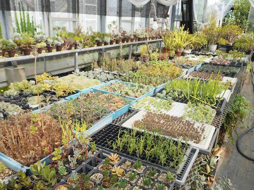 多肉植物の栽培棚