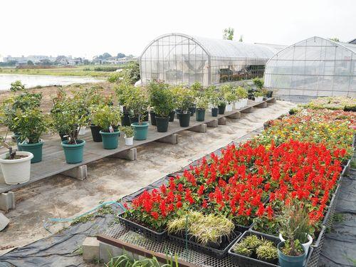 鉢バラやポット苗管理場