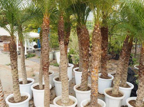 検定練習用植物