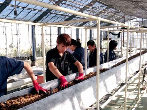 養液栽培ハウス
