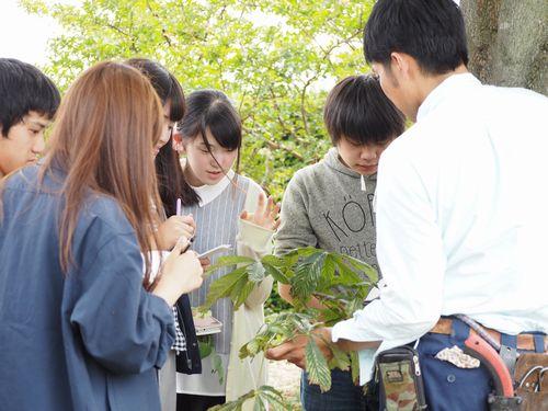 造園基礎の授業(樹木の見分け方)