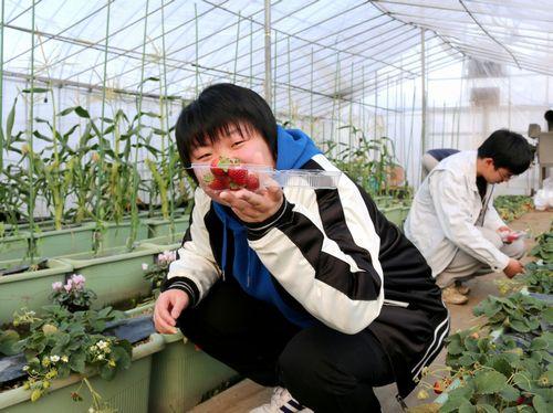 収穫物-イチゴ