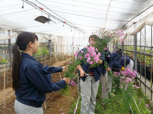 花材採取の様子