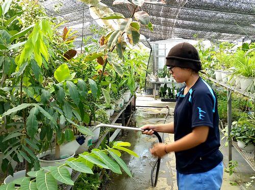 観葉植物管理の様子