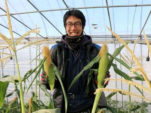 収穫物-トウモロコシ